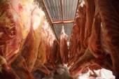 jatka krávy, zavěšení na háky v chladné polovině roku krav