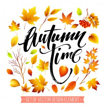 Color autumn leaves on white background. Fall leaf set. Vector illustration