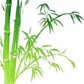 Fényképek Bambusz akvarell ágak elszigetelt fehér background. Vektoros illusztráció