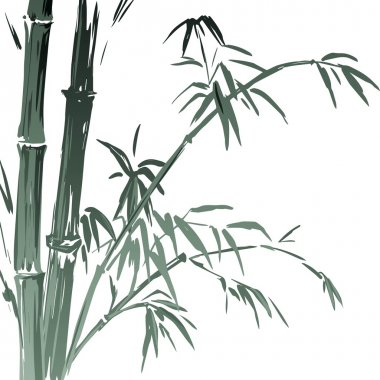 Watercolor Bamboo branches isolated on the white background. Vector illustration