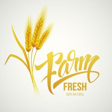 Wheat ears icon. Ears of Wheat. . Vector illustration