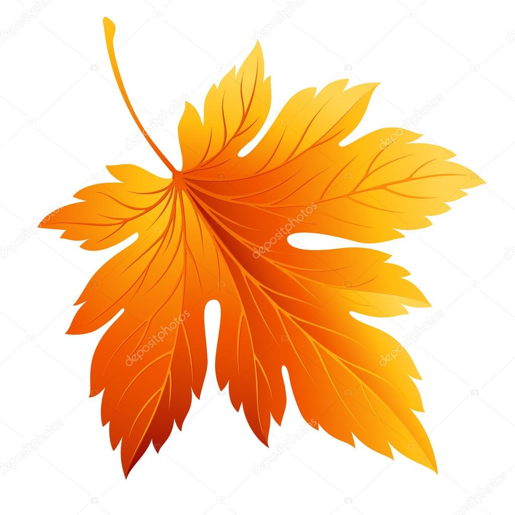 Fall leaf isolated in white. Vector illustration — Stock Vector © Vik_Y #78452796