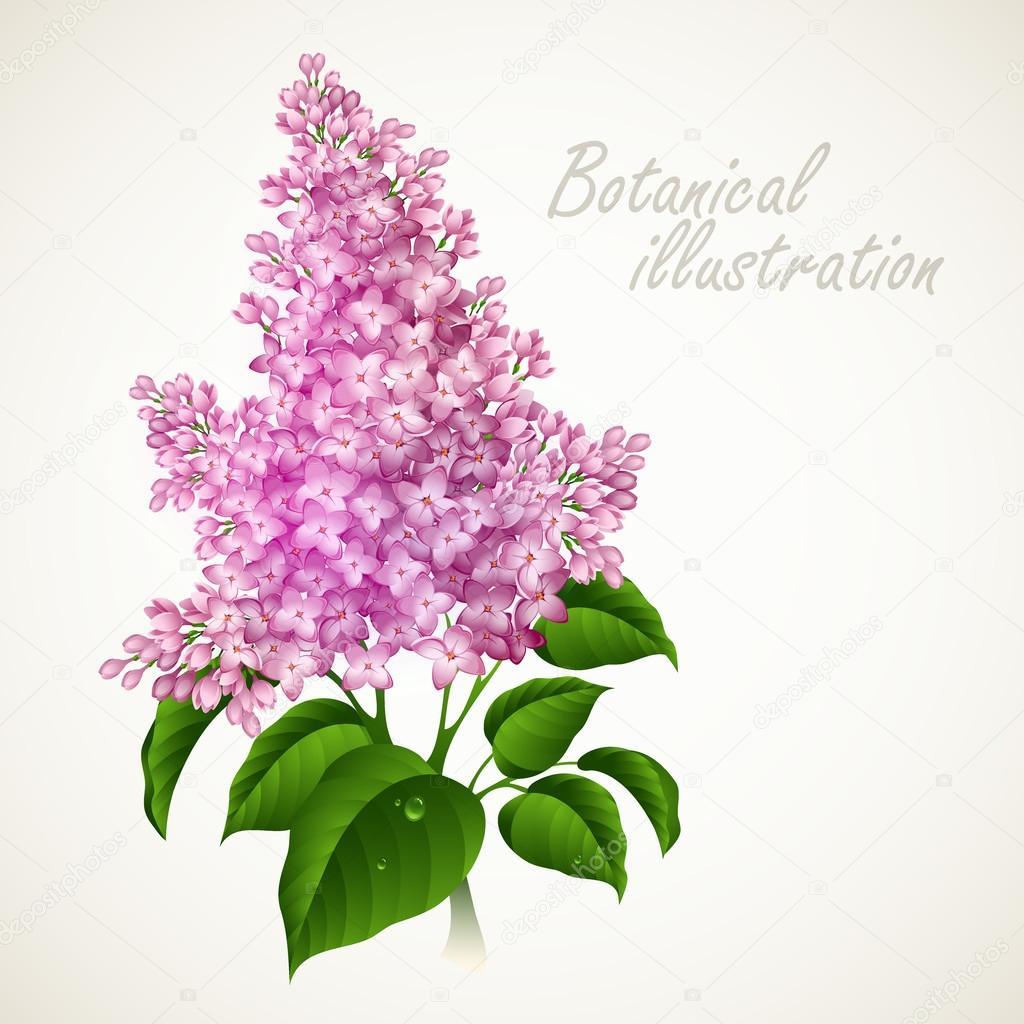 Botanical vector illustration. Vintage floral card