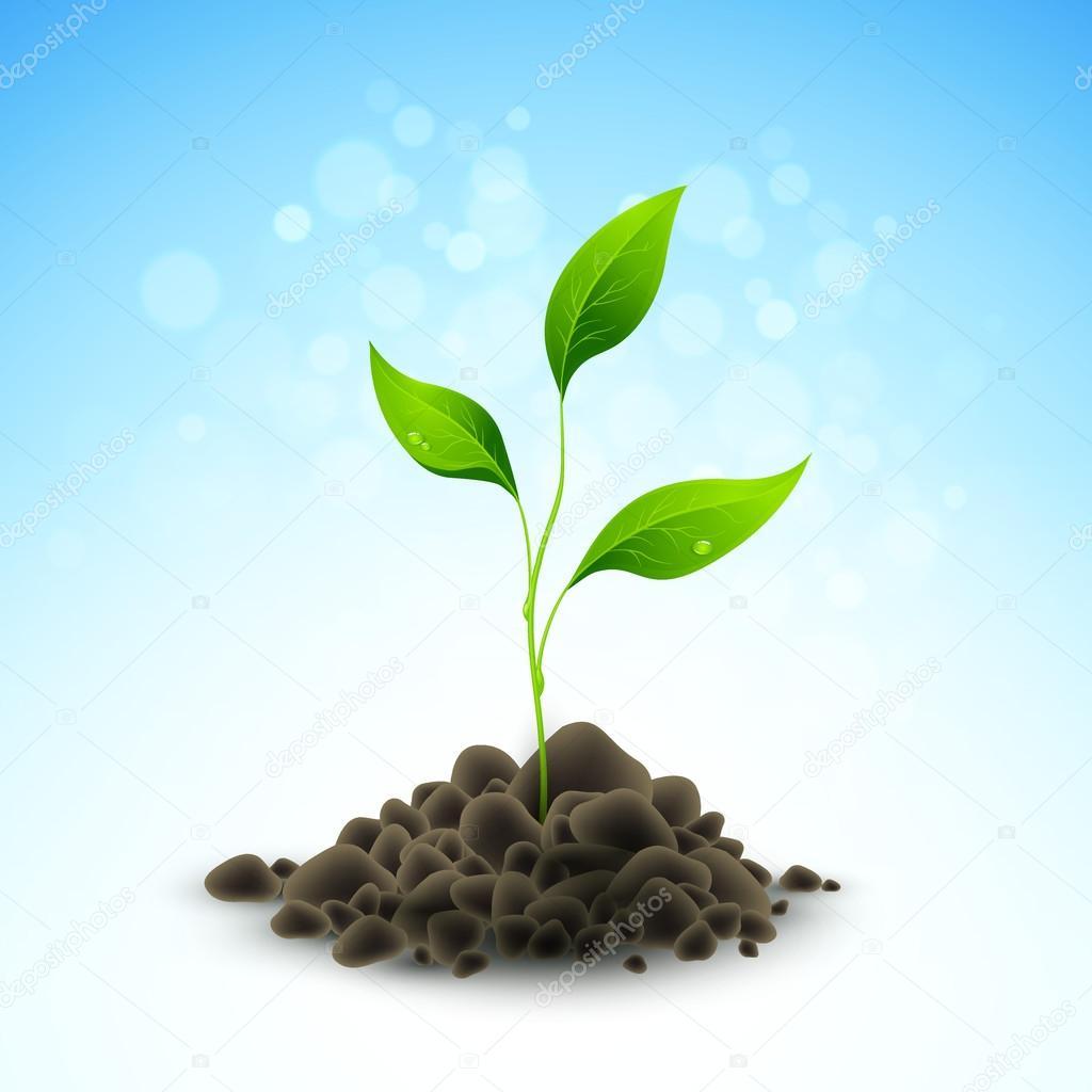 Plant sapling growing. Vector illustration