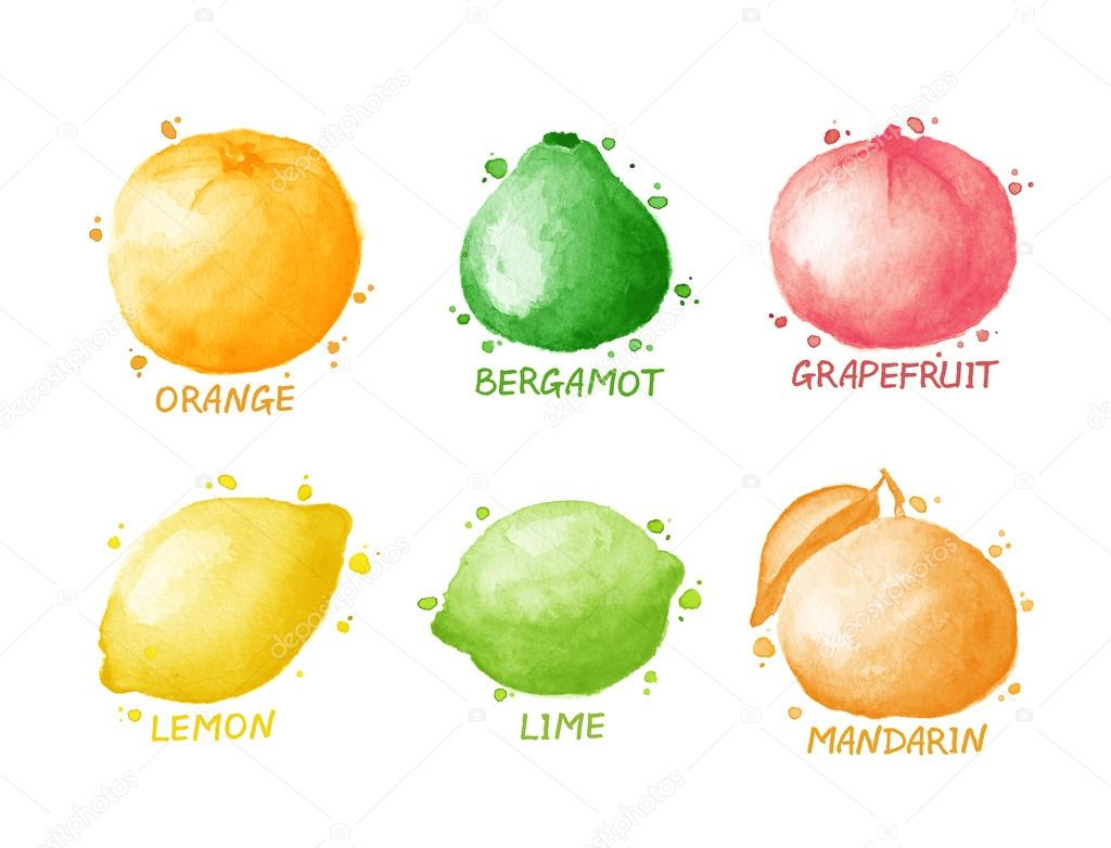 Fruits and berries set - lemon, grapefruit, lime, orange, mandarin