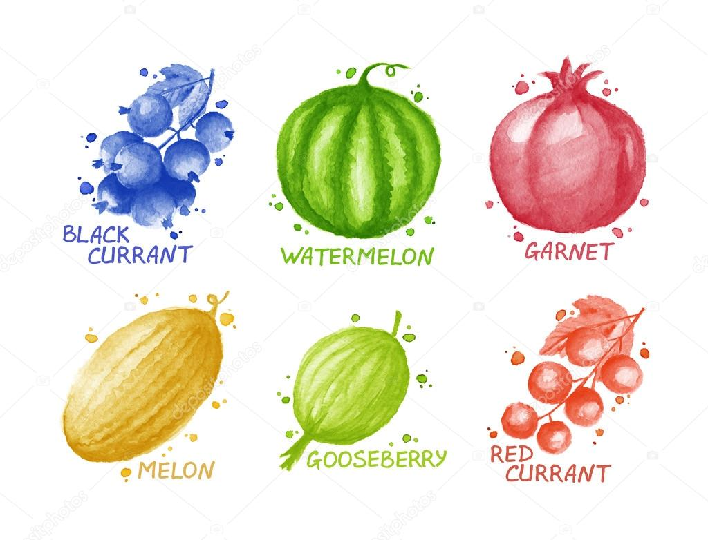 Fruits and berries set - blackcurrant, mellon, garnet, watermelon, gooseberry, redcurrant.