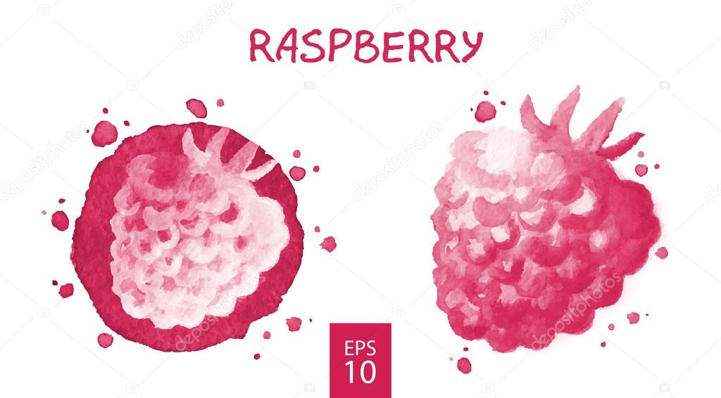 Fruits set - raspberry