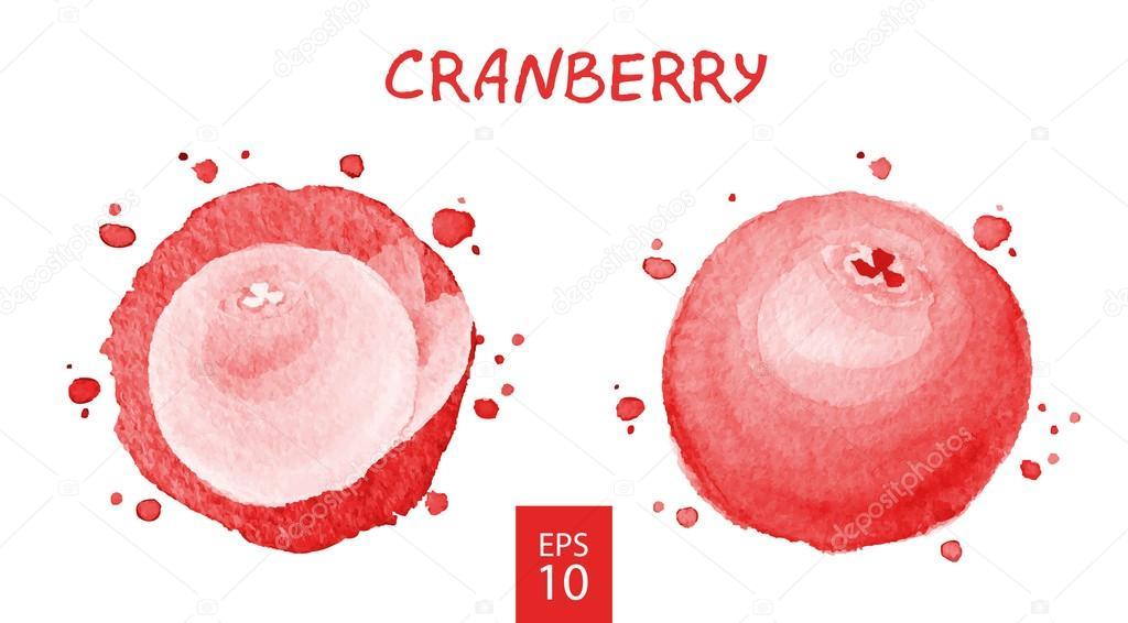 Fruits set - cranberry
