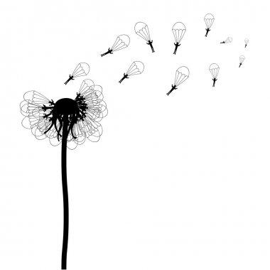 Vector illustration of dandelion on white background