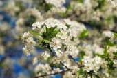 Květiny strom nad přírodou pozadí jarní květiny jarní pozadí