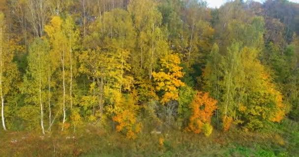 4K pohled pohyb podél podzimního lesa