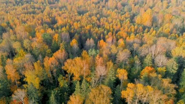 Pohled shora nad lesem podzimu