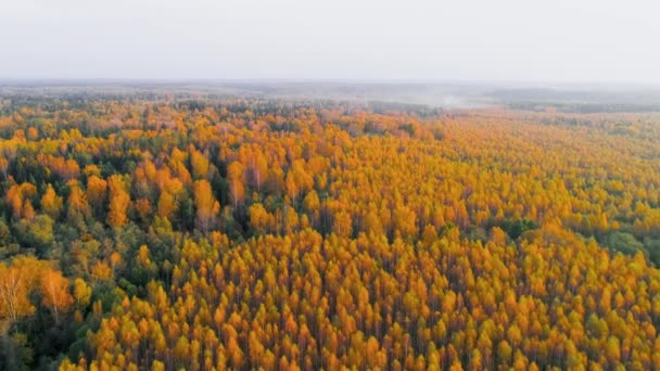 Felülnézetből légi őszi erdő felett