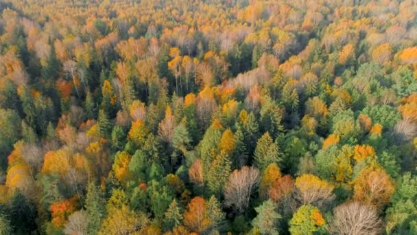Top view  above aerial autumn forest