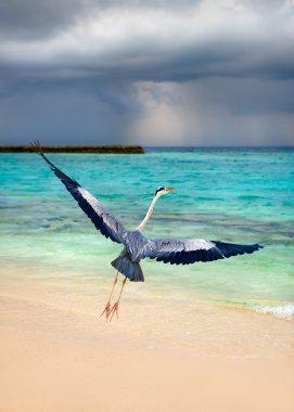 Maldives tropical beach bird take wing