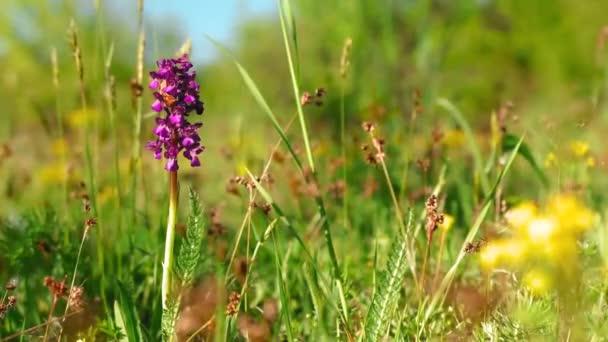 Wild purple flowers in wind during spring season