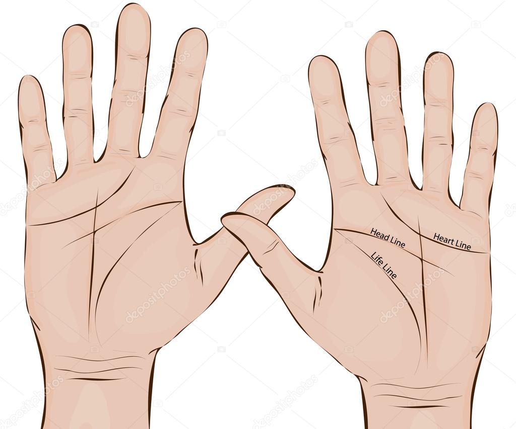 Palmistry. Hands. Two palms