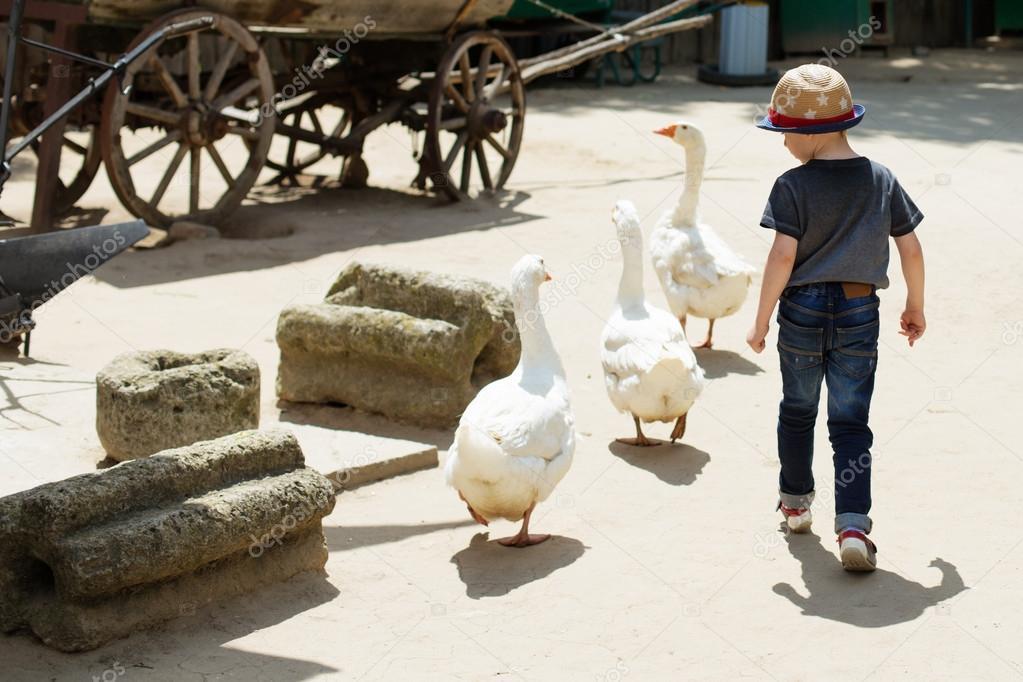 Nino Jugando Con Los Gansos En El Zoo De Mascotas Foto De Stock