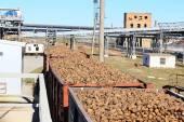 Fotografie Güterwagen mit Zuckerrüben auf der Railroad bei Zuckerrüben Zucker pl