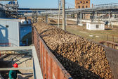Fotografie Güterwagen mit Zuckerrüben auf der Eisenbahn bei Rübenzucker