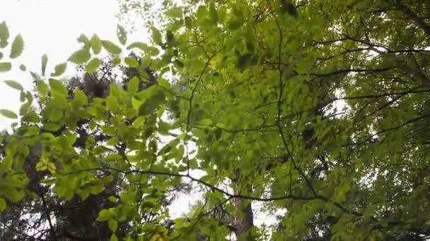 Mezi korunami stromů se zvedala zatažená obloha. borové větve