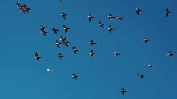 Ptáci stáda pozadí na obloze