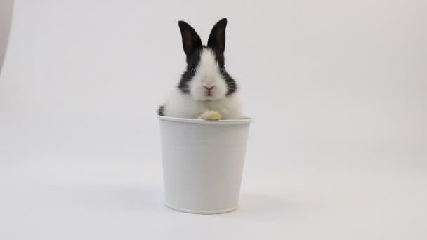 Close up Cute Little Fluffy Bunny Rabbit