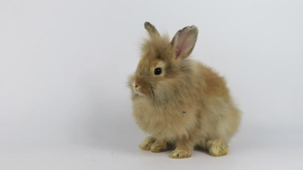 Niedliche kleine flauschige Kaninchen, Nahaufnahme Kleiner Osterhase