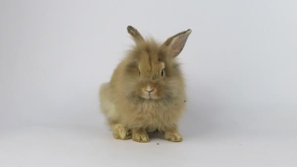 Roztomilý malý chlupatý králíček králík, zblízka malý velikonoční zajíček
