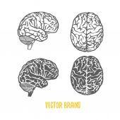 vektoros illusztráció agy