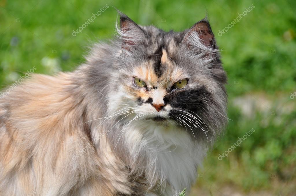 Beautiful multicolor cat