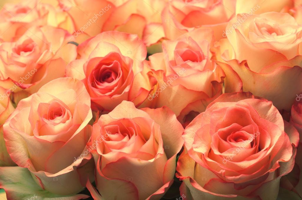 Large bright bouquet of white-pink roses