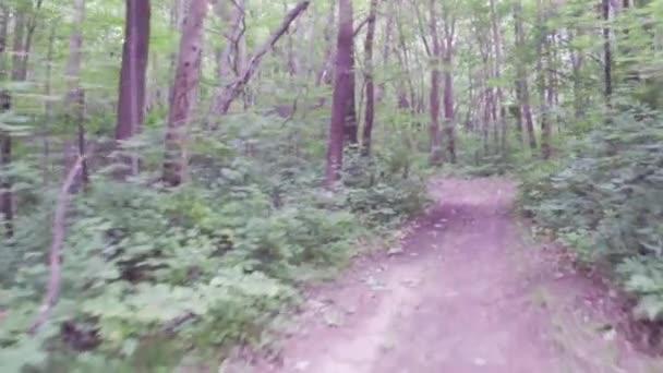 Séta vagy futás gyakorlat dirt ösvényen az erdő