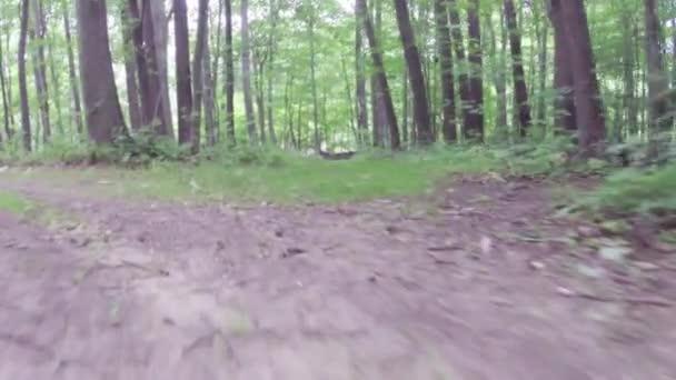 Chůze nebo běh cvičení podél polní cesty v lese