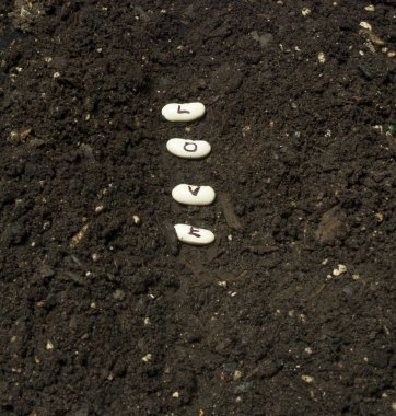 Planting Seeds Of Love In A Garden Row