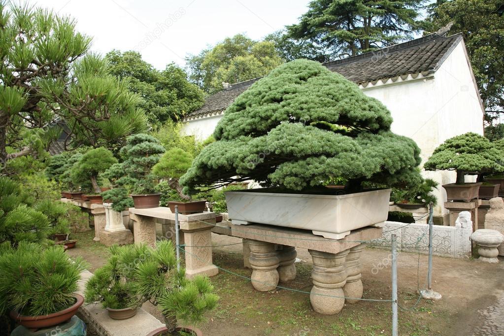 Zierbäume Garten Stockfoto Bananna 67281403