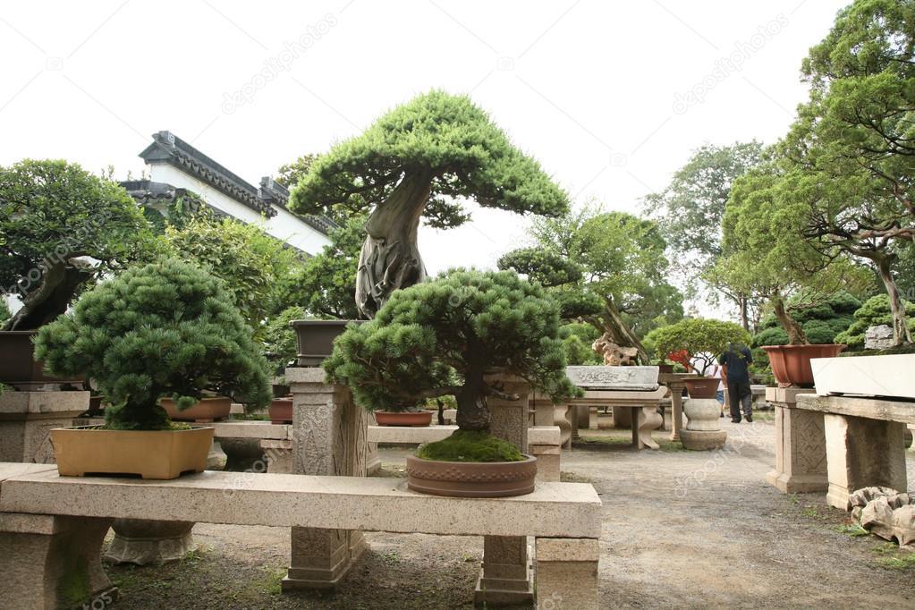 Rboles ornamentales de jard n foto de stock bananna for Arboles ornamentales jardin