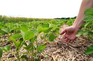 An innovative method of growing grain wheat, soybeans, corn. Han