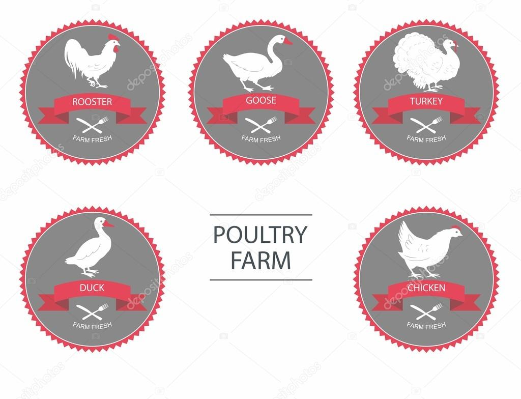 poultry farm set of detailed quality vector silhouettes of