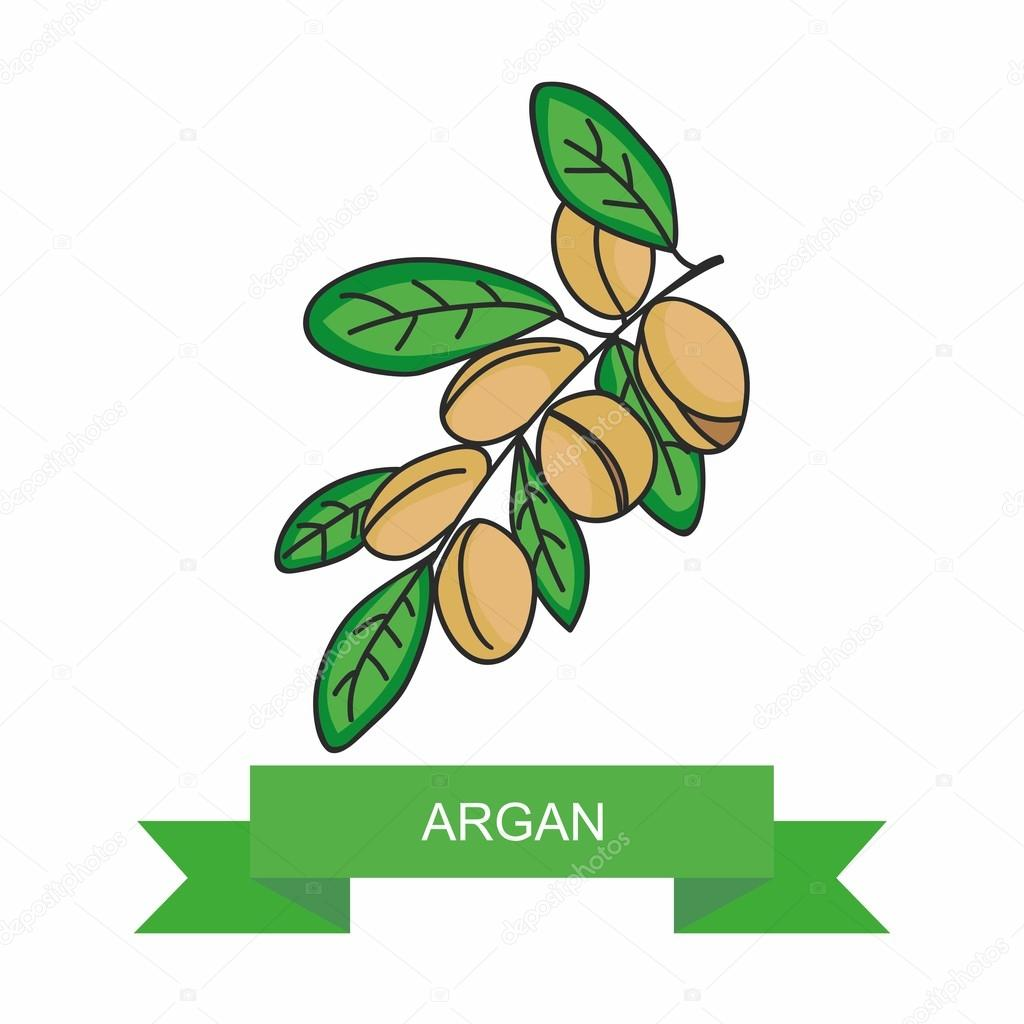 Argan branch with fruits. Vector illustration