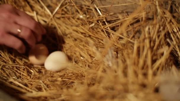 Female hands taking eggs