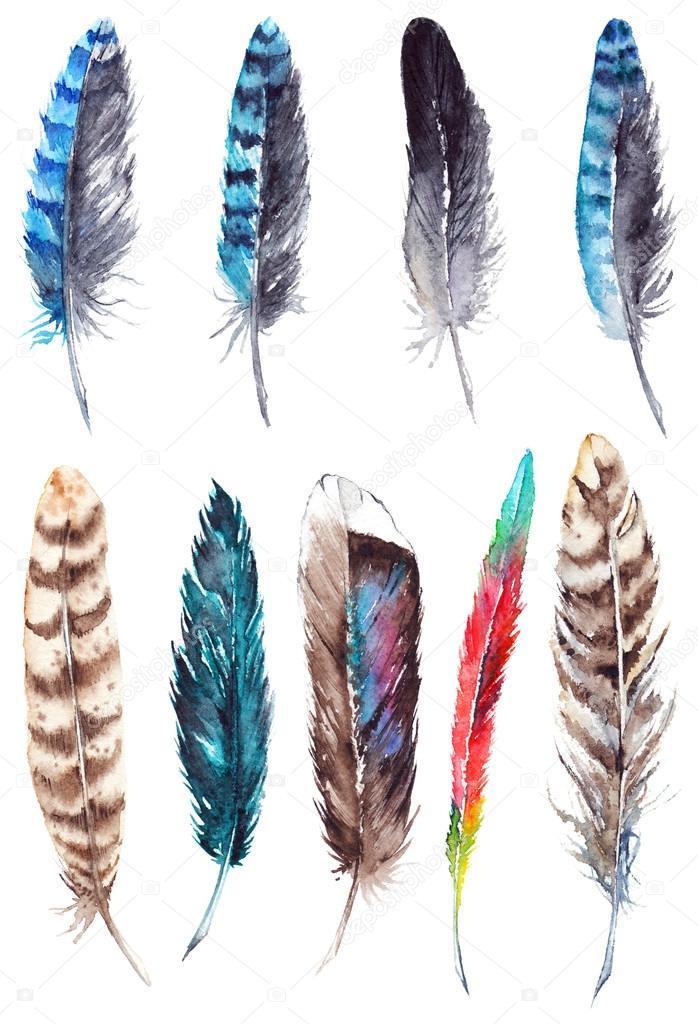 Plumas de aves exóticas colorido acuarela conjunto aislado ...