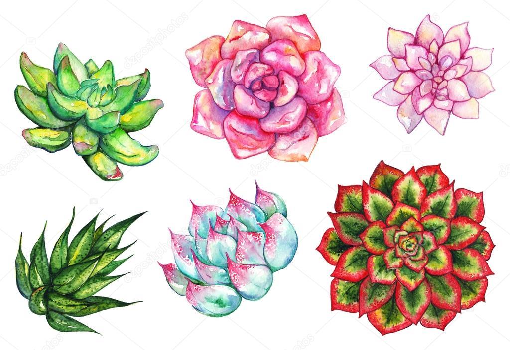 Cactus Flower Line Drawing : 孤立的水彩多汁的仙人掌花植物手绘集 — 图库照片 silmairel#