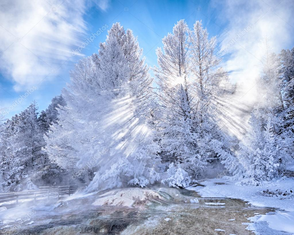 Snow Covered Trees with Sunbeams at Mammoth Hot Springs