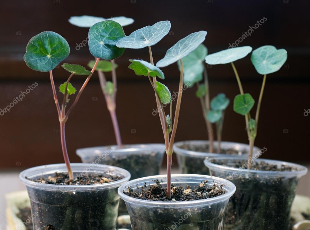 New Flower Seedlings