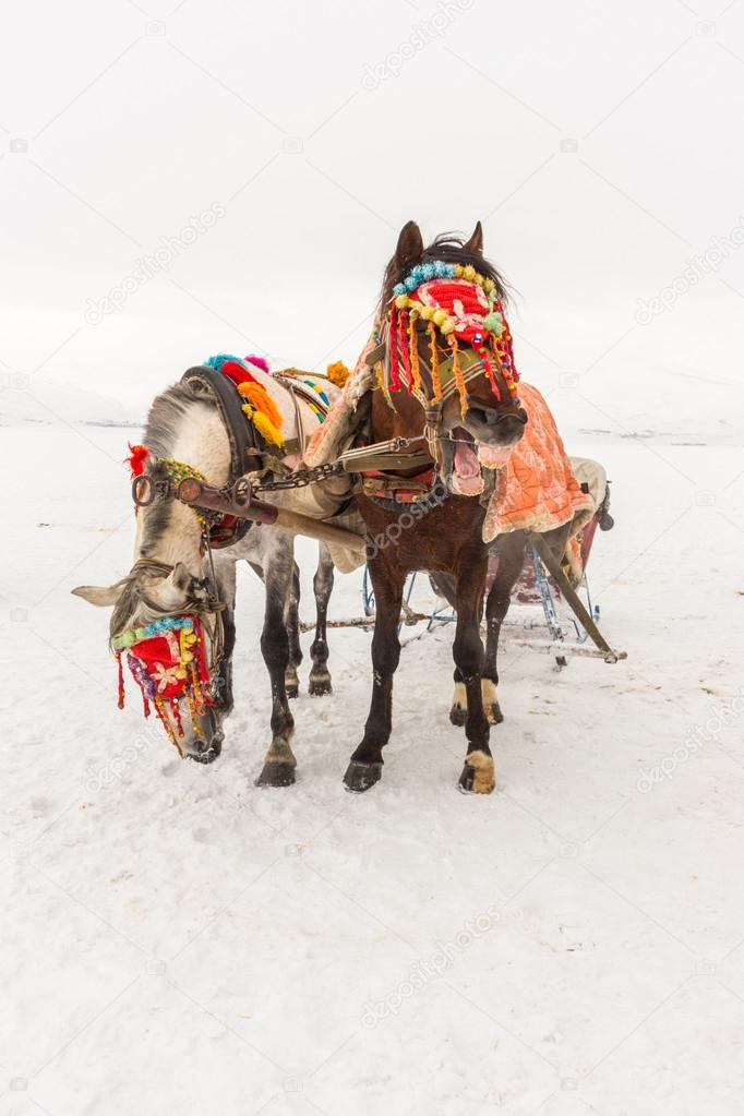 Horses and Winter Landscape