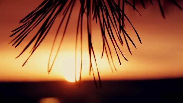a naplemente fák ágai