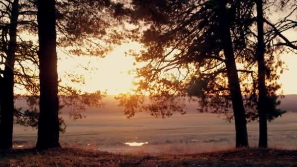 jehličnatého lesa při západu slunce