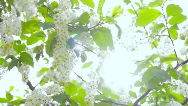 Kvetoucí strom při západu slunce