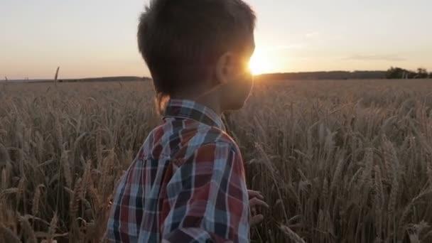 Junge läuft durch ein Weizenfeld bei Sonnenuntergang